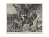 Foxes at Play Giclee Print by Carl Friedrich Deiker