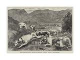 Westmoreland Sports, Hound Trial Race, Grasmere Giclee Print by Basil Bradley