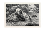 Otter Hounds, 1873 Giclee Print by Basil Bradley
