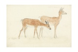 American Deer Giclee Print by Anthony Devis