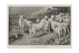The Wild Cattle of Chillingham Giclee Print by Basil Bradley