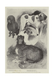 Premiership Prize-Winners at the Ladies' Kennel Association's Show at the Botanical Gardens Giclee Print by Cecil Aldin