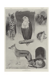 New Occupants of the Zoo Giclee Print by Cecil Aldin