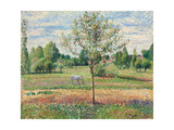 Meadow with Grey Horse, Eragny; Le Pre Avec Cheval Gris, Eragny, 1893 Stampa giclée di Camille Pissarro