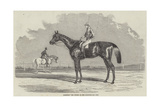 Kingston, the Winner of the Goodwood Cup, 1852 Giclee Print by Benjamin Herring
