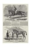 Winning Racehorses Giclee Print by Benjamin Herring