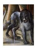 Dog Giclee Print by Benvenuto Di Giovanni