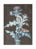 Still Life of a Thistle Giclee Print by Barbara Regina Dietzsch