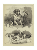 The St Bernard Club Dog Show Giclee Print by Charles Burton Barber