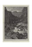 Wild Darrie Giclee Print by Charles Auguste Loye