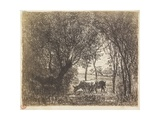 Vaches Sous Bois, 1862 Giclee Print by Charles Francois Daubigny