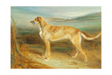 A Scottish Deerhound Giclee Print by Charles Hancock