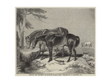 Horses, the Property of William Wigram, Esquire Giclee Print by Charles Landseer