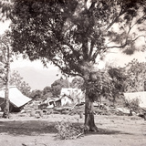 Aftermath of a Hurricane, Tahiti, Late 1800s Photographic Print by Charles Gustave Spitz