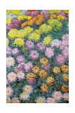 Massif De Chrysanthemes, 1897 Giclee Print by Claude Monet
