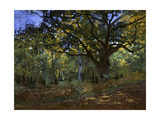 The Bodmer Oak, Fontainebleau Forest, 1865 Giclee Print by Claude Monet