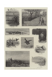 Illustrations from The Badminton Library of Sports and Pastimes, Moor and Marsh, Field and Covert Giclee Print by Charles Whymper