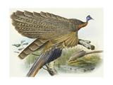 Phadianidae. Argusianus Grayli, 1870-1872 Giclee Print by Daniel Girard Elliot