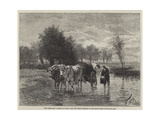 The Water-Cart Giclee Print by Constant-emile Troyon