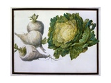 Turnip, Cabbage Giclee Print by Claude Aubriet
