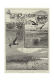 Duck-Shooting at Long Point Island, on Lake Erie Giclee Print by Charles Whymper