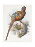 Phasianus Elegans (Elegant Pheasant), 1870-1872 Giclee Print by Daniel Girard Elliot