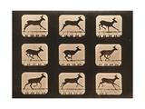 Image Sequence of a Running Deer, 'Animal Locomotion' Series, C.1881 Reproduction procédé giclée par Eadweard Muybridge