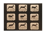 Image Sequence of a Running Deer, 'Animal Locomotion' Series, C.1881 Giclee Print by Eadweard Muybridge