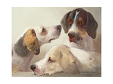 A Study of Hounds Giclee Print by Edward Robert Smythe