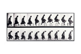 Motion Study, C.1872-1885 Giclee Print by Eadweard Muybridge
