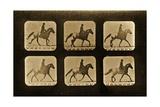 Horses. Irregular, 'Animal Locomotion' Series, C.1881 Impression giclée par Eadweard Muybridge
