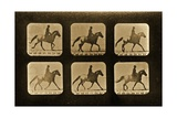 Horses. Irregular, 'Animal Locomotion' Series, C.1881 Giclee Print by Eadweard Muybridge