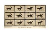 The Horse in Motion, 'Animal Locomotion' Series, C.1878 Lámina giclée por Muybridge, Eadweard