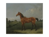 A Bay Horse in a Field Giclee Print by Edmund Bristow