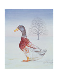 Winter-Drake Giclee Print by  Ditz