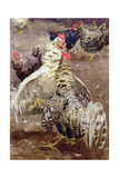 Roosters, 1910 Giclee Print by Ernest Procter