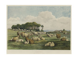 Sheep Giclee Print by Edward Duncan