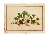 Gooseberries, 1818 Giclee Print by Fedor Petrovich Tolstoy