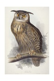 Eagle Owl, Bubo Maximus, 1832-1837 Giclee Print by Edward Lear