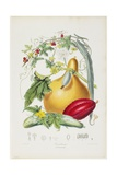 Cucurbitaceae, the Gourd Tribe, from Illustrations of the Natural Orders of Plants, 1849-1855 Giclee Print by Elizabeth Twining