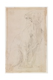 Seated Dog, 1710-1715 Giclée-tryk af Francesco Solimena