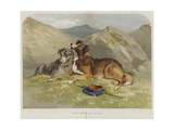 Shepherd's Dogs Giclee Print by F. Tayler