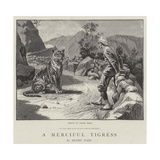 A Merciful Tigress Giclee Print by Frank Dadd