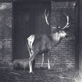 Wallich's Deer Photographic Print by Frederick William Bond