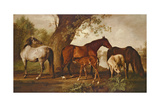 Mare and Foals Giclee Print by George Stubbs