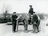 An Baby Indian Elephant with Keepers A. Church and H. Robertson at London Zoo, June 1922 Photographic Print by Frederick William Bond