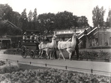 The Llama Ride - Once a Feature at Zsl London Zoo, September, 1923 Photographic Print by Frederick William Bond