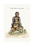 The Middle-Sized Black Monkey, 1749-73 Giclee Print by George Edwards