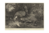 In the Enemy's Country Giclee Print by George Bouverie Goddard
