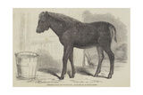 Remarkable Hybrid, from the New Forest Giclee Print by George Landseer